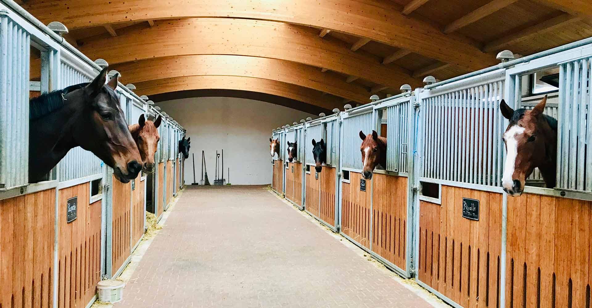 Pferde Bayern